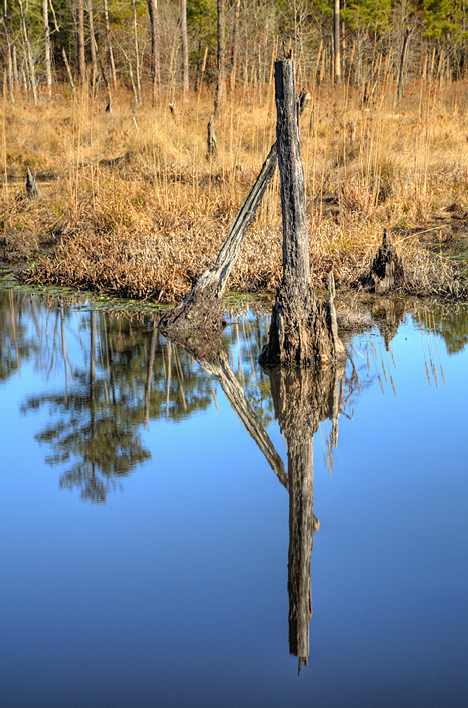The colors are different. The image above  would not look the same in warmer months. This was shot just north of Holly Springs AR on a county road. A creek crossing the road is routed through a large culvert, leaving a nice sized pond up stream. In the pond, the two old dead trees and sky made an interesting reflection, particularly when crowned with the winter version, golden yellow grass. This is not available during the warmer months.
