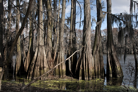 Not far from a lakeside residence, this view gives you an idea of the width of the lake. It is long and skinny. Cypress trees line the shores. In certain parts of the lake, such as what is seen in our Corndancer article, are thickly concenterated.