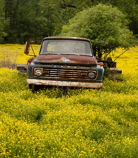 The old truck while seemingly under attack by yellow flowers is in good company. The picture is a study in contasts. Something on it's last legs is surrounded by new growth and renewal.