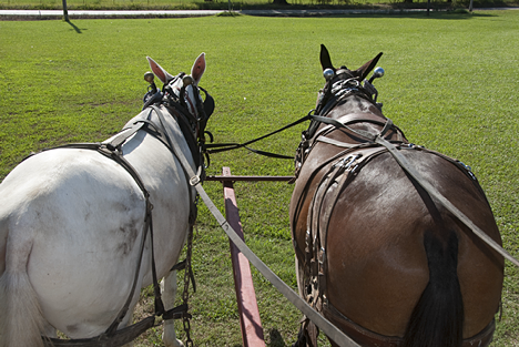 The east view of a west bound mule team. Riding shotgun in a mule wagon.