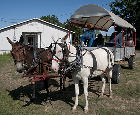 John Cruce, his wagon and team pull up for a visit in the side yard of the Prairie Grove Community Center, northeast of Fountain Hill, Arkansas.