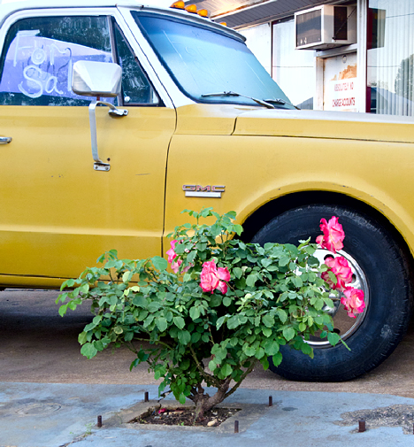 GMC and roses 2
