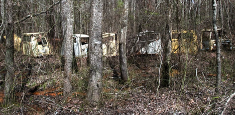 old truck cabs in woods