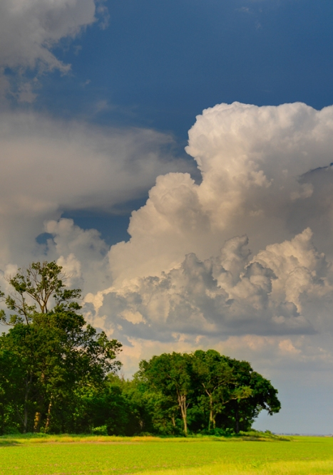 Thunderhead forming over wheat field