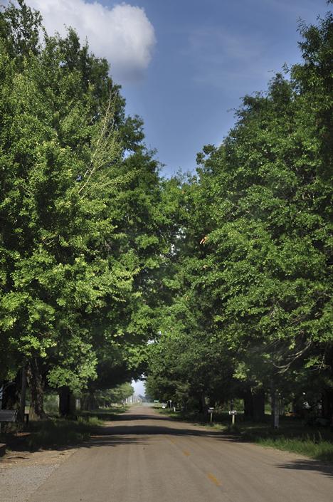 tree tunnel in Twist, Arkansas