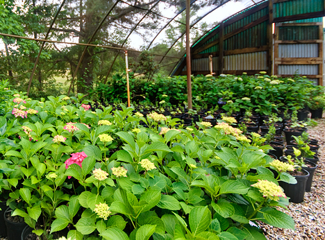 Spring Creek Nursery Greenhouse