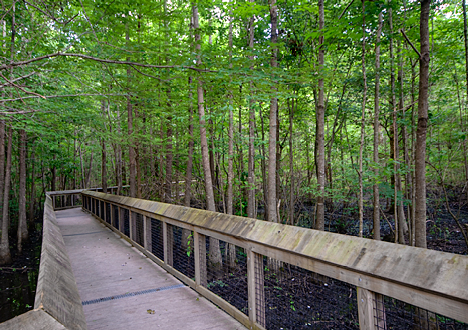 Louisiana Purchase State Park board walk