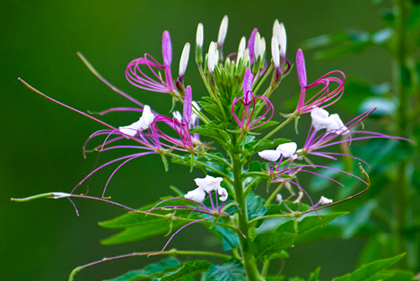wild flower at Saline River Farindale access