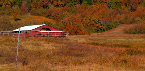 Fall foliage and barn