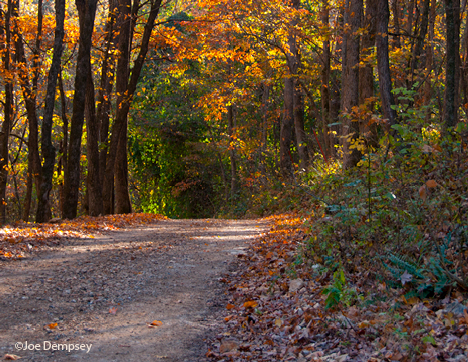 country road and fall foliage