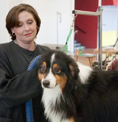 Dog handler/groomer with Australian Shepherd