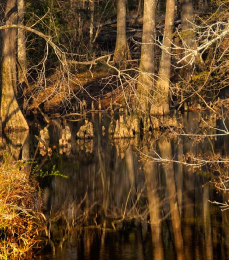 cypress in creek