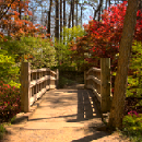 Half Moon Bridge, Garvan Woodland Gardens