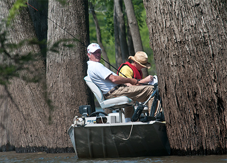 Anglers and old growth cypress