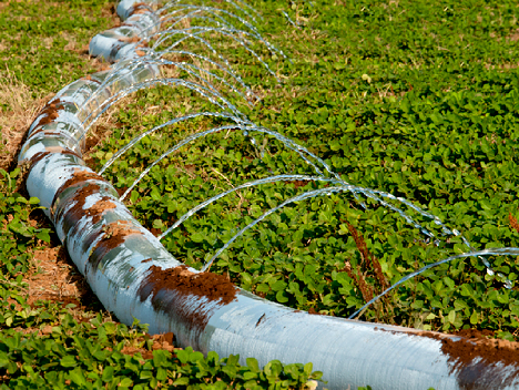 soybean irrigation