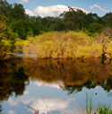 Pond in Star City AR