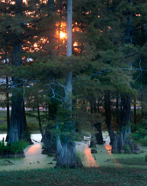 Sun behind cypress at Wiley McGehee Memorial Park