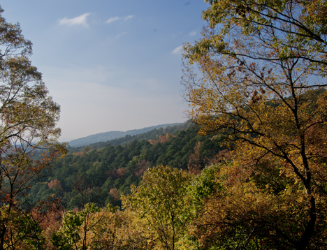 Fall foliage in late afternoon White Oak Mountain
