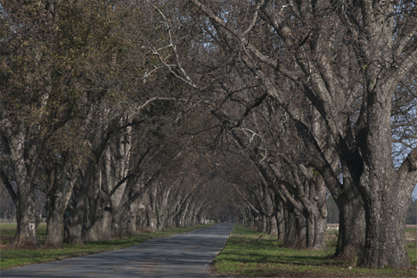 Pecan tunnel south of Scott Arkansas