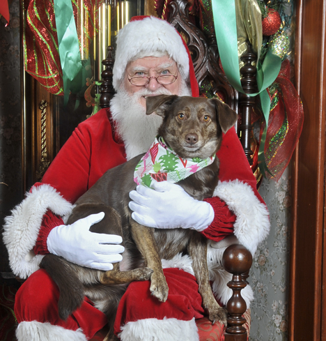 Santa and Patagonian Water Dog