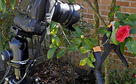 Camera and clamps on bush to hold foliage out of the way