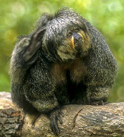 Fuzzy monkey on a limb