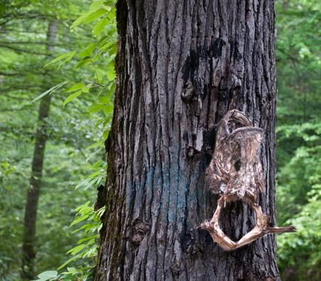 dead fish nailed to tree