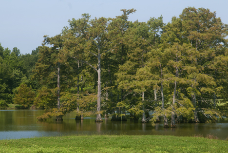 fishing pond at Tarry Arkansas