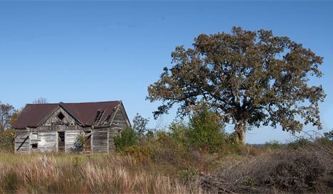 Old house with home place tree
