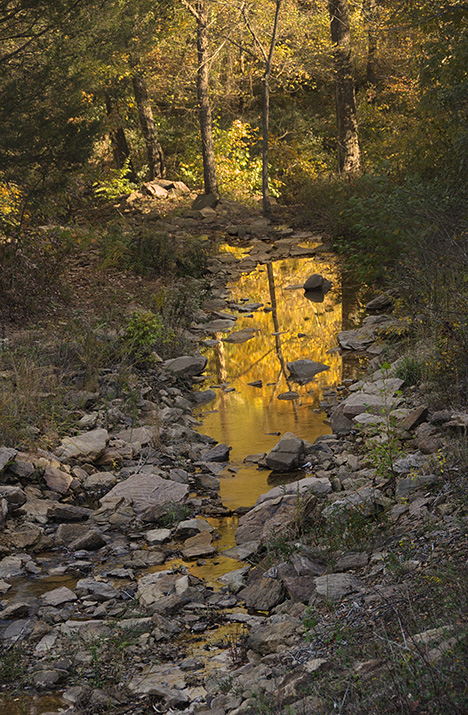 Mountain stream in shadows reflecting sun lit foliage