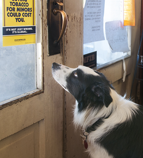 Border Collie, Maggie at Phiilps General Merchandise, Fountain Hill,Arkansas