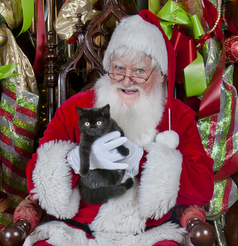 Black kitten with Santa at the Humane Society photo session