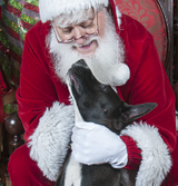 Click on Santa and the dog for more pictures