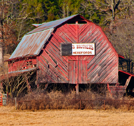 "Click on the red barn for our original ""Baring it all"" post."