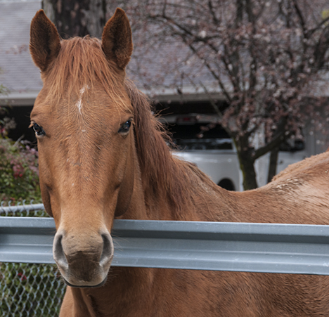 I think this horse would have stuck his or her head in the truck had not the gate been closed between us. The horse came a long way to make the visit while I was changing batteries in one of my cameras.