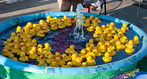 Yellow rubber ducks at Star Daze.