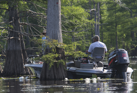 "This is the quintessential ""spring-fishing-in-the-cypress"" scene. The image speaks for itself."