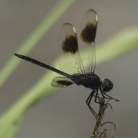 Dragon fly at Noble Lake