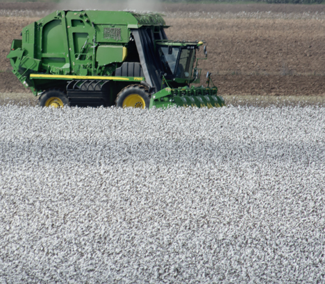 Cotton picker in cotton field
