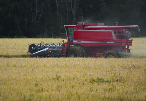 case combine harvesting rice