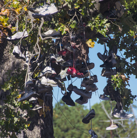 Somehow you simply do not expect to find a tree full of shoes. Except if you are in Sardis, Arkansas. Then, it is an everyday occurrence.