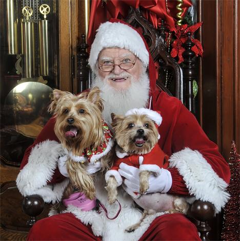 santa with yorkies