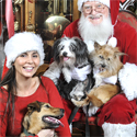woman santa and dogs