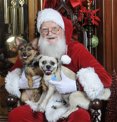 santa and two rescue dogs
