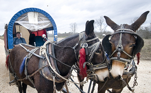mule team and wagon