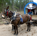 Galon Wilson and his mules