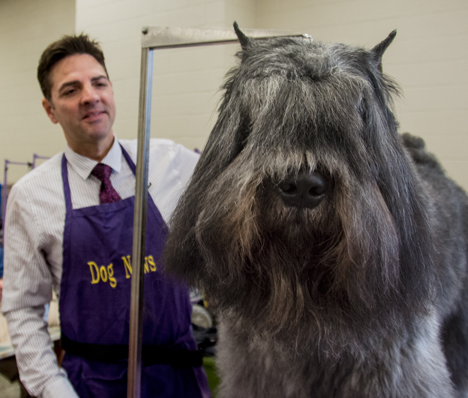 bouvier-desflander dog and handler