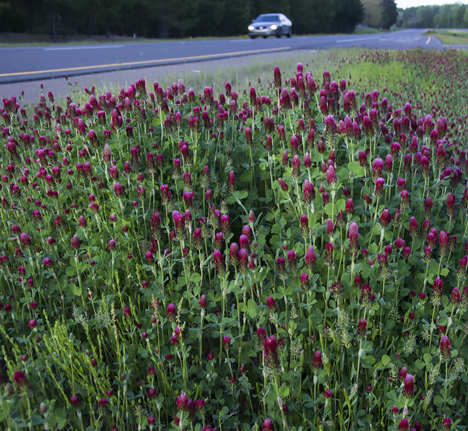 highway clover in Arkansas