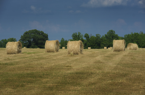 Round hay bales in field