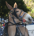 Carriage mule in New Orleans